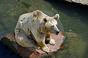 Brown Bear Stock Photo - Image: 8479320