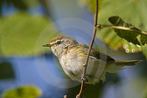 Little Bird Stock Images - Image: 8479744
