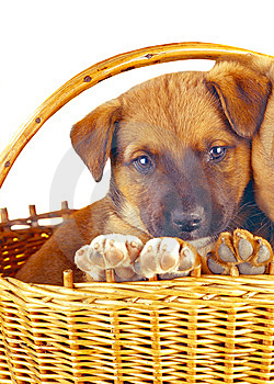Puppy Stock Photo - Image: 8480000