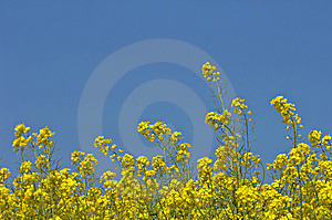 Yellow And Blue Royalty Free Stock Images - Image: 8481449