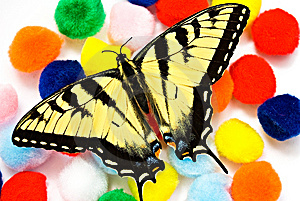 Colorful Butterfly Background Stock Photography - Image: 8482662