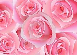 Rose Stock Photos - Image: 8482863
