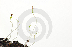 Fragile New Life Royalty Free Stock Photos - Image: 8483808