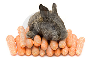 Small Rabbit Stock Image - Image: 8483841
