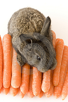 Small Rabbit Stock Images - Image: 8483864