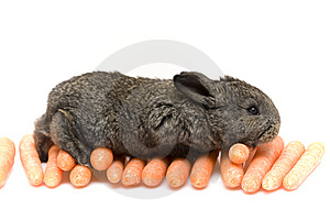 Small Rabbit Stock Photography - Image: 8483872