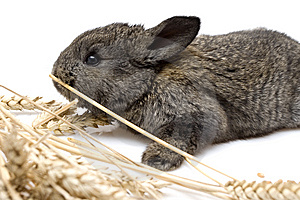 Small Rabbit Royalty Free Stock Images - Image: 8483929