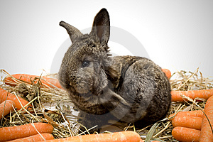 Small Rabbit Royalty Free Stock Photos - Image: 8483978