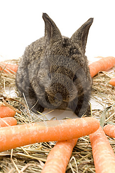 Small Rabbit Royalty Free Stock Images - Image: 8483999
