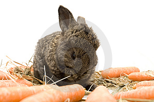 Small Rabbit Royalty Free Stock Photos - Image: 8484038