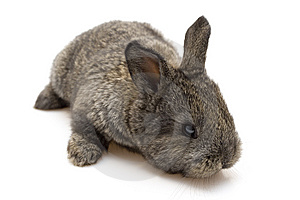 Small Rabbit Stock Photography - Image: 8484042