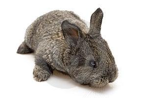 Small Rabbit Stock Photography - Image: 8484042
