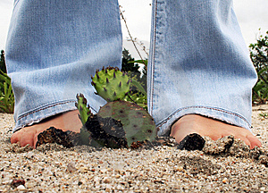 Sandy Cactus Royalty Free Stock Photos - Image: 8484808