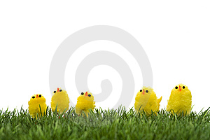 Family Of Yellow Chicks Stock Photo - Image: 8485850