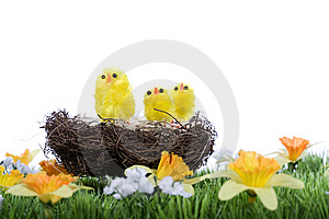 Baby Chicks Sitting In Nest Stock Image - Image: 8485961