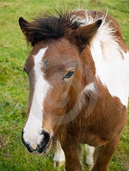 Foal Stock Photos - Image: 8489393
