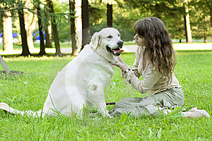Girl With The Golden Retriever In The Park Stock Images - Image: 8492074