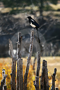 Bird Standing On The Fence Royalty Free Stock Photo - Image: 8492165