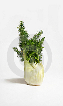Fennel Royalty Free Stock Images - Image: 8492619