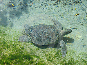 Turtle Stock Images - Image: 8493884