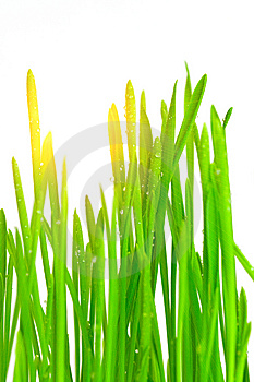 Green Grass Royalty Free Stock Images - Image: 8494019