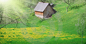 Meadow With Dandelions Royalty Free Stock Photo - Image: 8495065