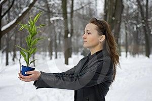 Green Plant Royalty Free Stock Photo - Image: 8496105