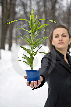 Green Plant Stock Photos - Image: 8496223