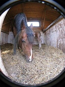 Horse Stock Photos - Image: 8498063
