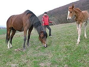 Horse Royalty Free Stock Photo - Image: 8498135