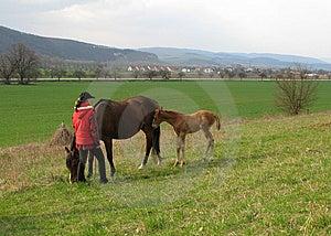 Horse Stock Photo - Image: 8498200