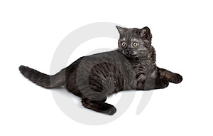 Small Kitty On White. Stock Photography - Image: 8499812
