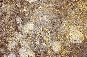 Wall texture Free Stock Photos