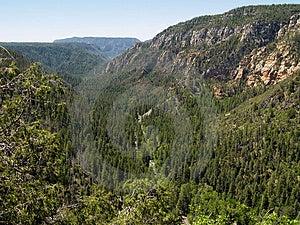 Oak Creek Canyon II Royalty Free Stock Images - Image: 858879