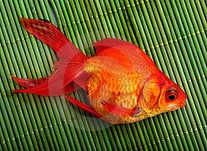 Goldfish Stock Image - Image: 8500131