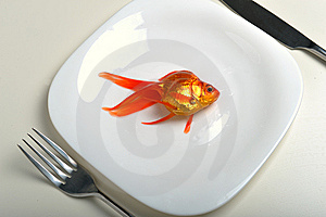 Goldfish In Plate Stock Photography - Image: 8500132