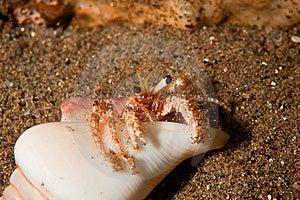 Reef Hermit Crab Stock Images - Image: 8500494