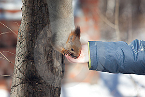 Eating Squirrel On The Tree Stock Photos - Image: 8500673