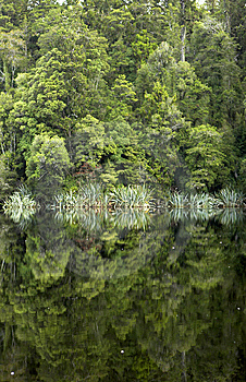 Reflection Of Trees On Lake Royalty Free Stock Photos - Image: 8502618