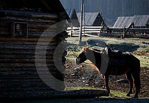 Horse Royalty Free Stock Image - Image: 8503366
