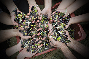 Hands And Olives Stock Photography - Image: 8504702