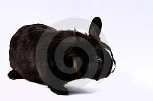 Little Easter Hare Stock Photography - Image: 8504972