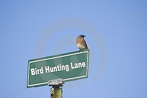 Bird What? Stock Photos - Image: 8506733