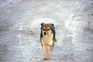 Snowdog Stock Images - Image: 8507344