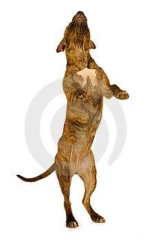 Stehender Hund Stockfoto - Bild: 8507600