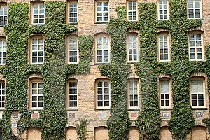 Ivy Wall Stock Photos - Image: 8507783