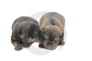 Two Small Blind Puppies Stock Photography - Image: 8509112