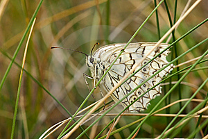 White Butterfly Stock Image - Image: 8512041