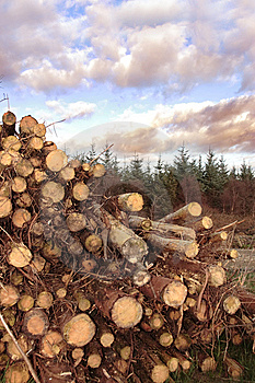 Log Pile Stock Photo - Image: 8512430