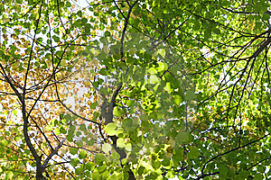 Trees Crown Stock Photography - Image: 8512522
